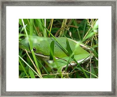 Hidden Frog Framed Print by Fortunate Findings Shirley Dickerson