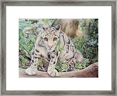 Hidden In Plain Sight - Clouded Leopard Framed Print