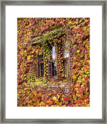 Hidden In The Maylake Ivy Framed Print by Ed Cilley