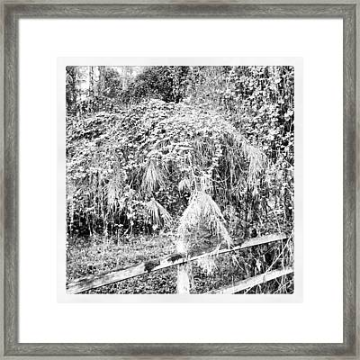 Hidden In Time Framed Print by Chasity Johnson