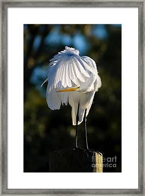 Hidden Framed Print by Joan McCool