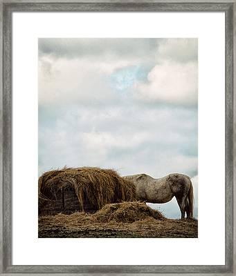 Hidden Framed Print by Kimberly Danner