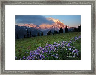 Hidden Majesty Framed Print