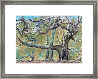 Hidden Oak And Canyon In Briones Park Framed Print by Asha Carolyn Young