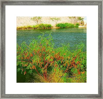 Framed Print featuring the photograph Hidden Oasis by David  Norman