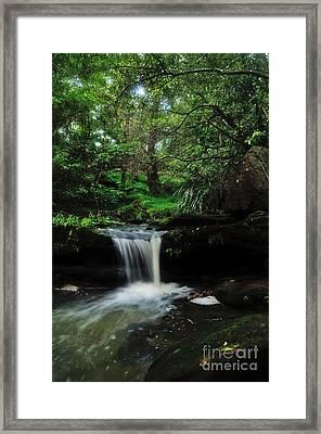 Hidden Rainforest Framed Print by Kaye Menner