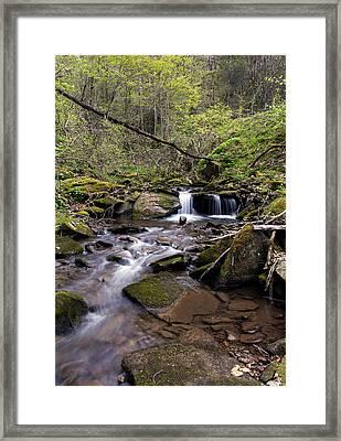 Hidden Streambed  Framed Print by David Lester