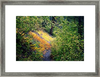 Hidden Trail Framed Print