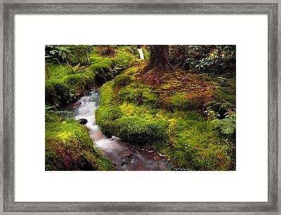 Hidden Woodland Corner. Benmore Botanical Garden. Scotland Framed Print by Jenny Rainbow