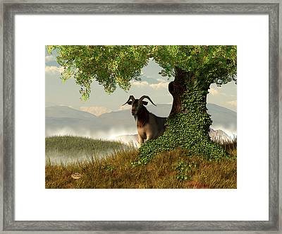 Hide And Goat Seek Framed Print