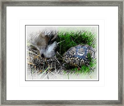 Hide And Seek Framed Print by Ernestine Manowarda