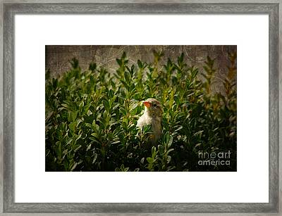 Framed Print featuring the photograph Hide And Seek by Mariola Bitner