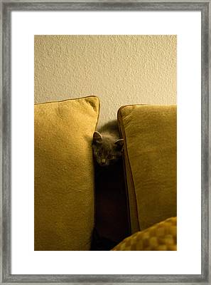 Hide And Seek Framed Print by Matt Radcliffe