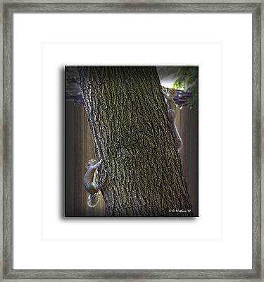 Hide And Seek Squirrels Framed Print by Brian Wallace