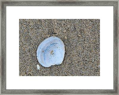 Hide In Your Shell Framed Print by JAMART Photography