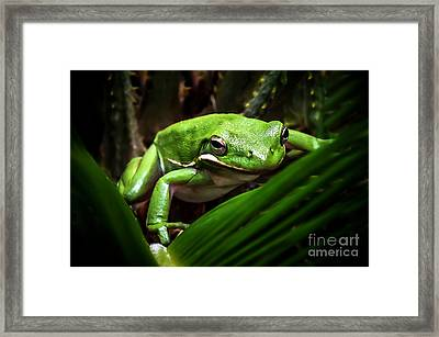 Hide N Seek Framed Print by Karen Wiles