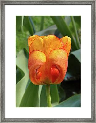 Hide-n-seek Tulip Framed Print