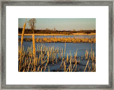Hiden Goose Couple Framed Print by Bruno Santos