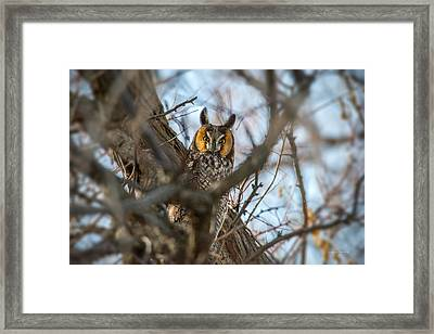 Hiding 2 Framed Print by Leland D Howard