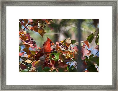 Hiding Away Framed Print by Linda Unger