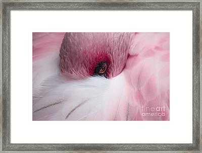 Hiding Flamingo Framed Print by Lisa L Silva