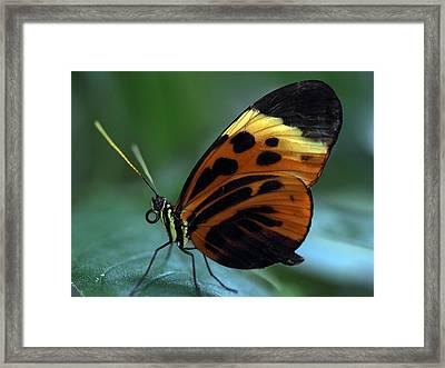 Hiding From The Sun Framed Print by Atchayot Rattanawan