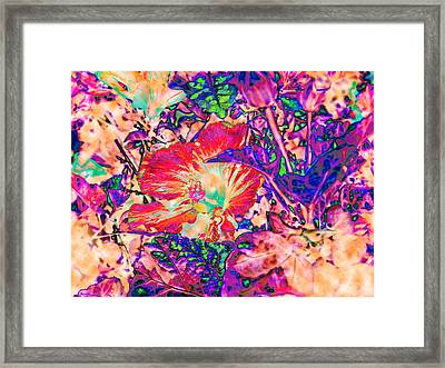 Hiding Hibiscus Framed Print