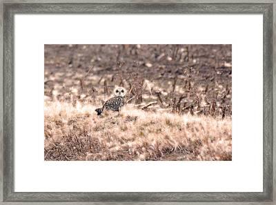 Hiding In Plain Sight Framed Print