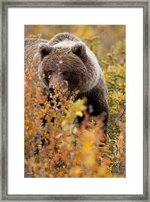 Hiding In The Bushes Framed Print by Tim Grams