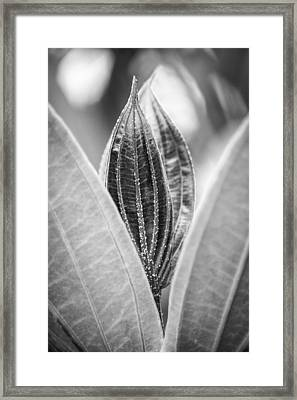 Hiding In The Green Bw Framed Print by Carolyn Marshall