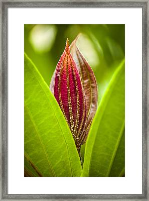 Hiding In The Green Framed Print