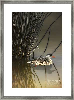 Hiding In The Reeds Framed Print