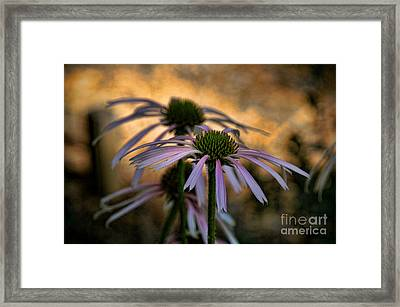Framed Print featuring the photograph Hiding In The Shadows by Peggy Hughes