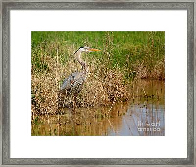 Hiding In The Weeds Framed Print