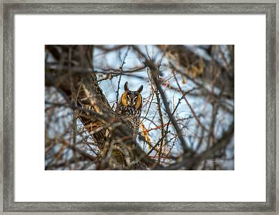 Hiding Framed Print by Leland D Howard