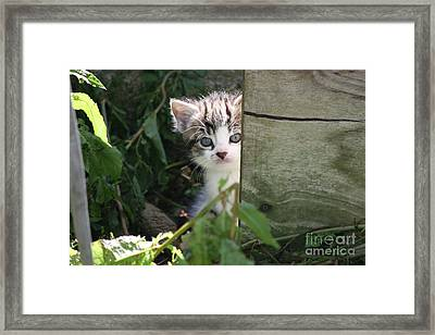 Hiding Out Framed Print by Jo Collins