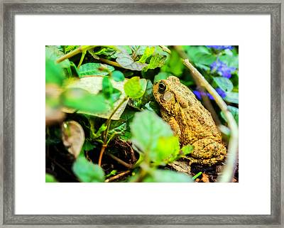 Hiding Out Framed Print by Jon Woodhams
