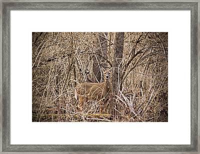 Hiding Out Framed Print
