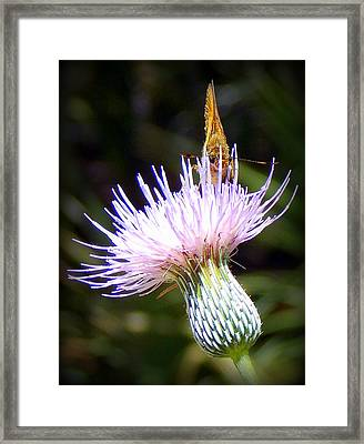 Hiding Out Framed Print by Sheri McLeroy