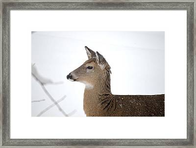 Framed Print featuring the photograph High Alert by Dacia Doroff