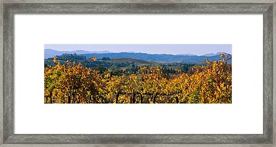 High Angle View Of A Field, Alexander Framed Print