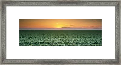 High Angle View Of A Lettuce Field Framed Print by Panoramic Images