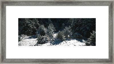 High Angle View Of A Snow Covered Fir Framed Print by Panoramic Images