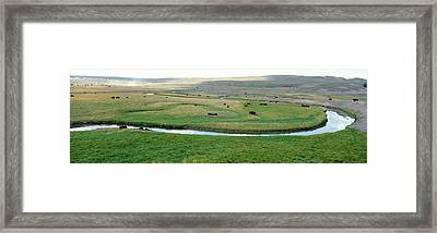 High Angle View Of American Bisons Framed Print