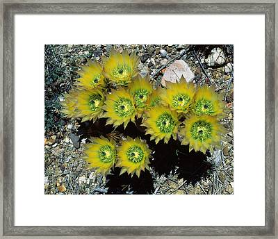 High Angle View Of Cactus Flowers, Big Framed Print by Panoramic Images