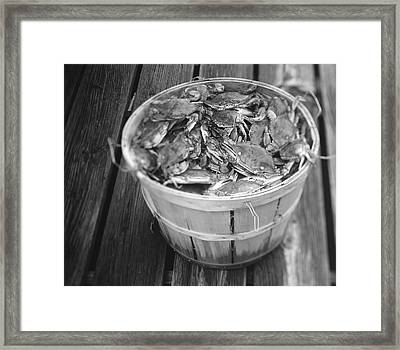 High Angle View Of Crabs In A Basket Framed Print
