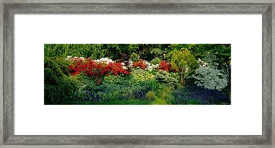 High Angle View Of Flowers In A Garden Framed Print by Panoramic Images