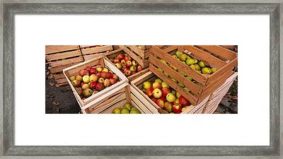 High Angle View Of Harvested Apples Framed Print by Panoramic Images