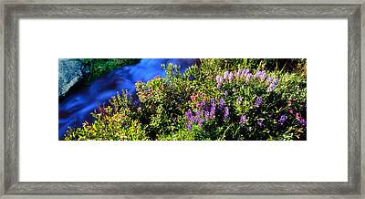High Angle View Of Lupine And Spirea Framed Print
