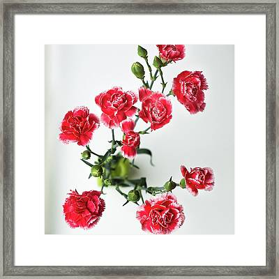 High Angle View Of Red Carnations Framed Print by Kateryna Kyslyak / Eyeem